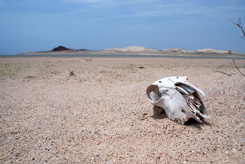 Skull on the beach