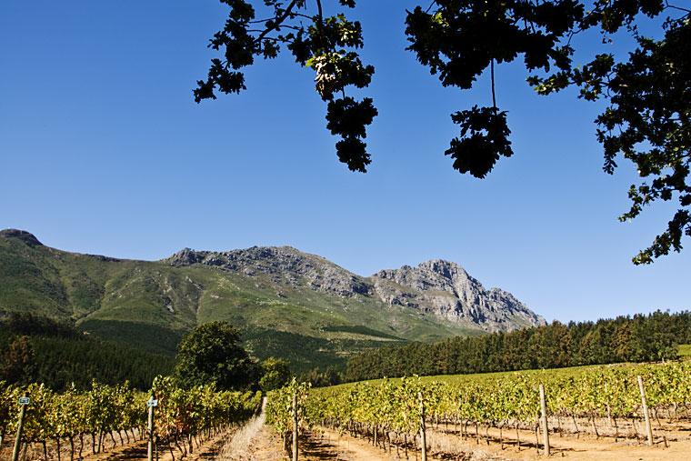 Delheim wine farm