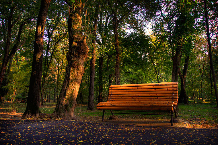 Photo of the week – A day in the park
