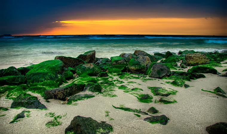Green algae
