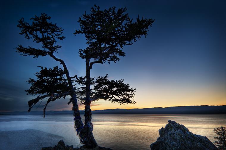 Holy tree