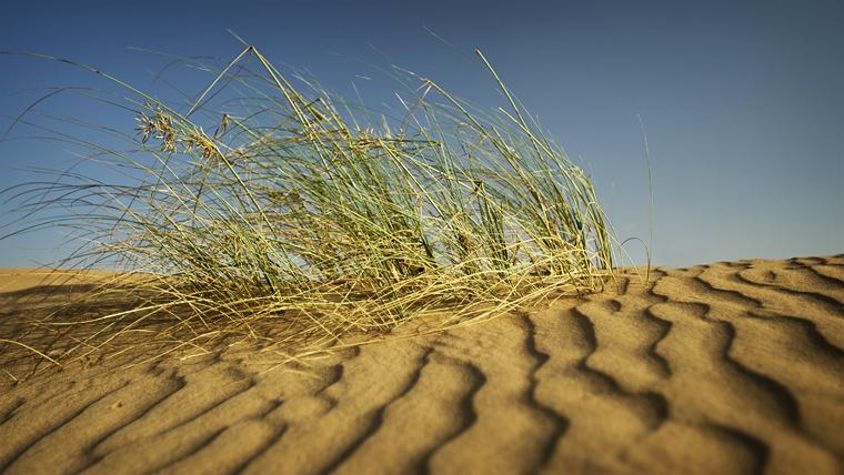 desert grass 2 middle east united arab emirates. Black Bedroom Furniture Sets. Home Design Ideas