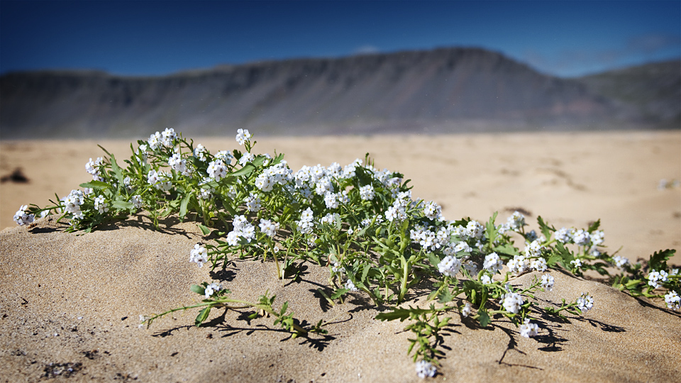 Flowers and sand