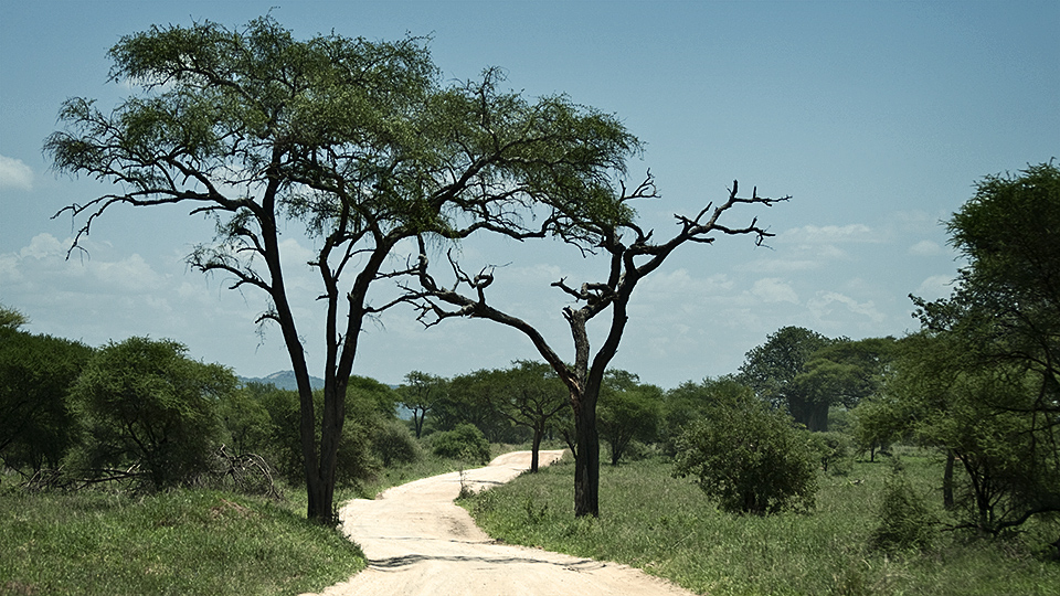 The lone African road