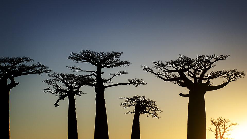 The Baobab Avenue #2