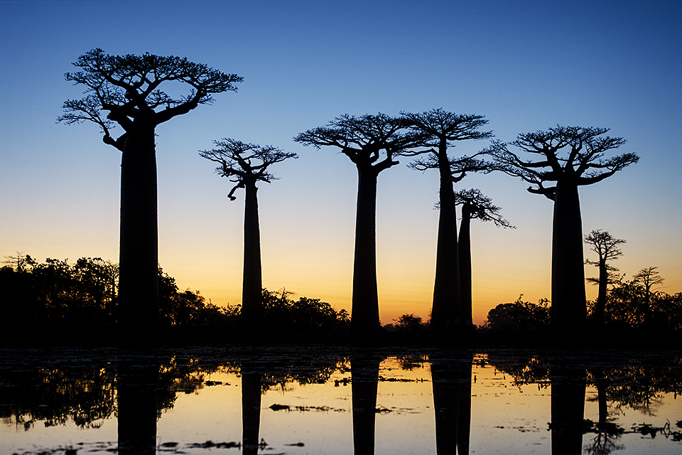 Sunset at the Baobab Avenue