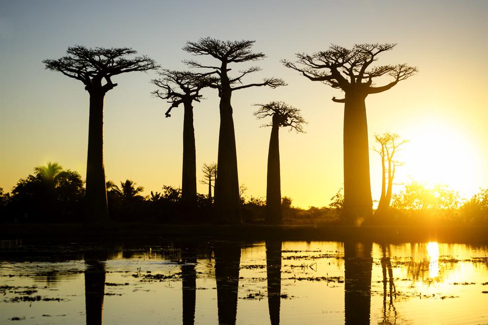 The Baobab Avenue #3