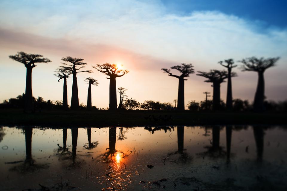The Baobab Avenue #4
