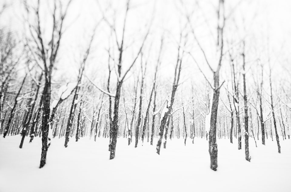 A snowy forest
