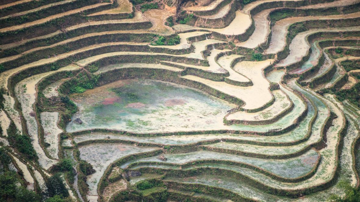 Sapa rice terraces