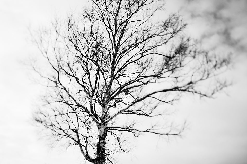 A lonely tree