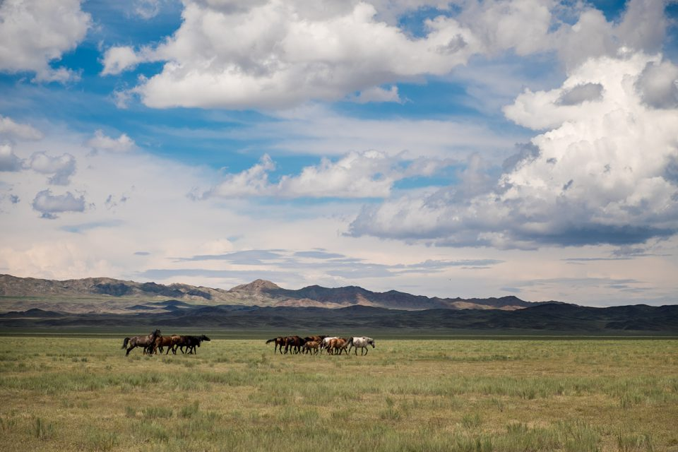 Kazakhstani horses