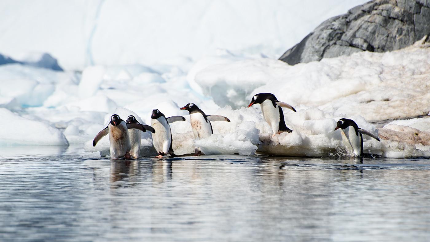 Penguins everywhere #2