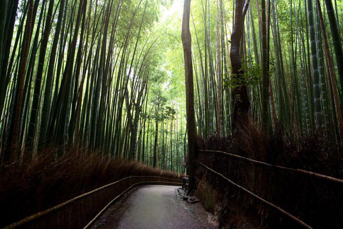 Arashiyama Bamboo Forest #1
