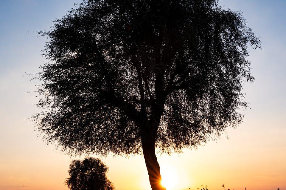 Desert trees #1