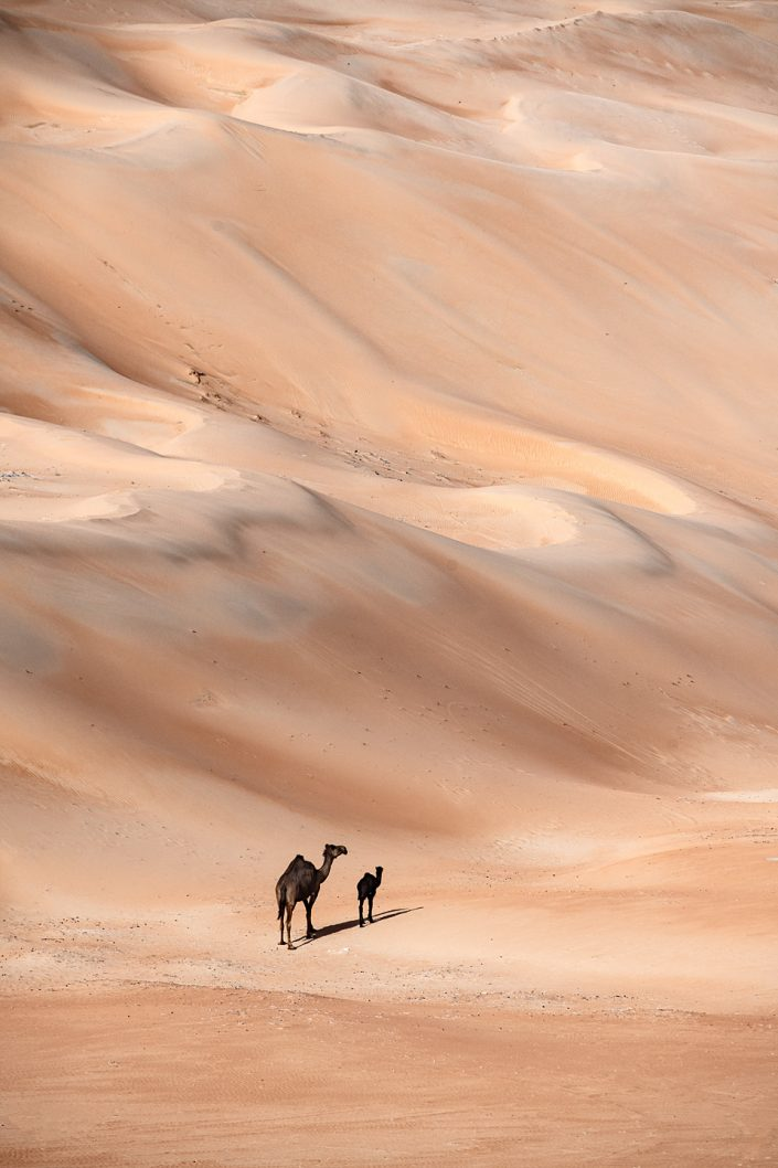 Nothing but camels