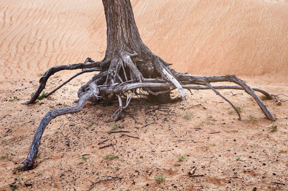 Desert trees #2